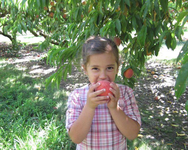 peaches july 2014 020