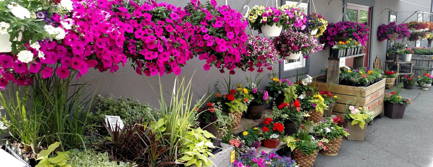 hanging baskets and planters