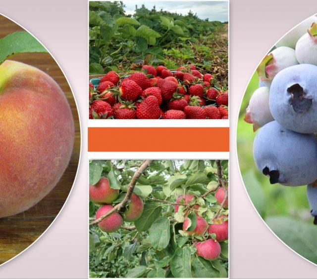 Harvest Schedule