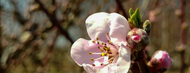 FB Blossom 2