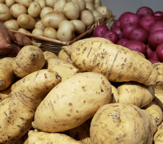 Apple Potato Gratin