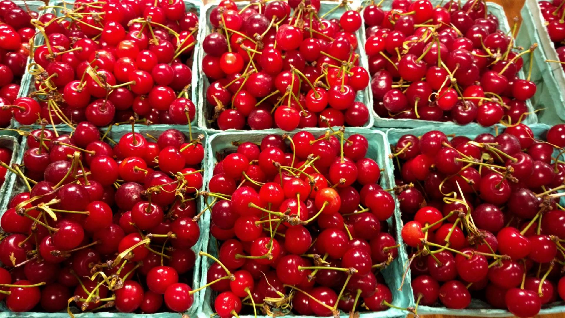 Tart Cherries | Brecknock Orchard LLC, Mohnton Lancaster